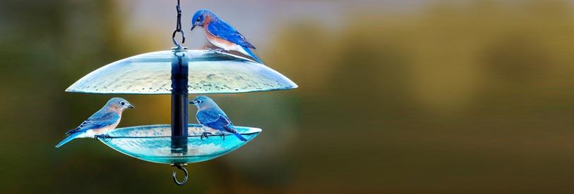 Bird Enthusiast!